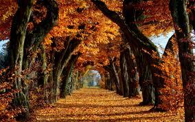Sonbahar Depresyonunun Sizi Ele Geçirmesine İzin Vermeyin (6 Öneri)