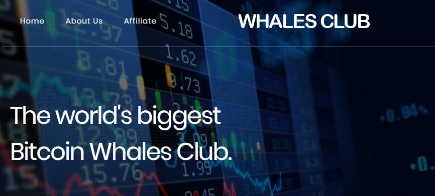Whales Club Projesi Nedir, Kazanç Planı Nasıldır?